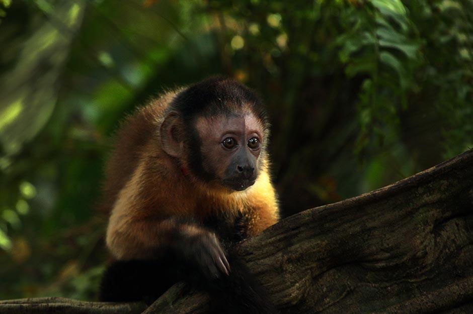 Amazonia. Foto: